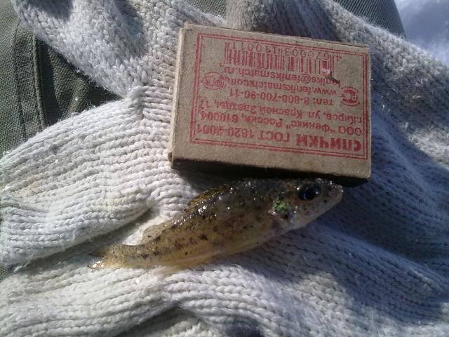 Рыболовный отчет WOLF  Нано монстры Кр.яра