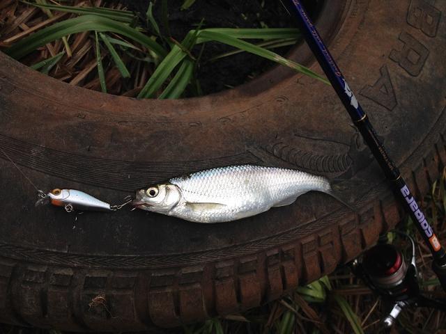 Рыболовный отчет Денис Вихров Проверил один прудик