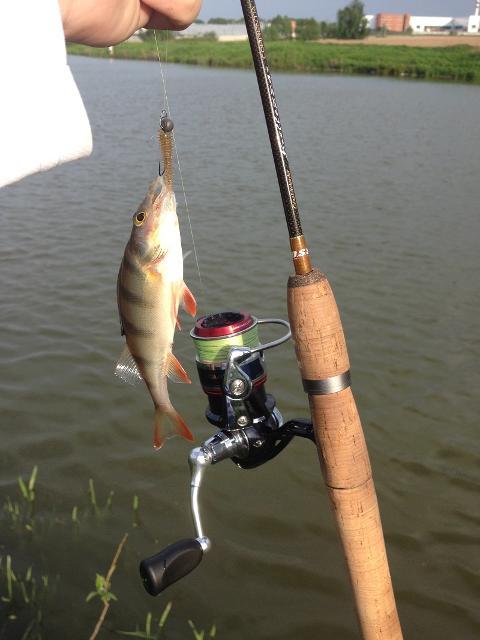 Рыболовный отчет Денис Вихров Поведение окуня не меняется