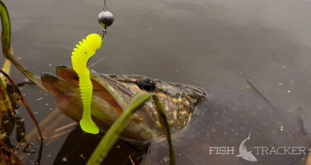 Отчет о рыбалке 24.10.2015