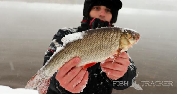 Белая рыба на спиннинг