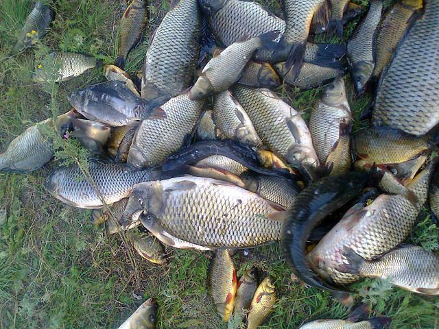 Рыболовный отчет Саша Стюхин соревнования по рыбной ловле