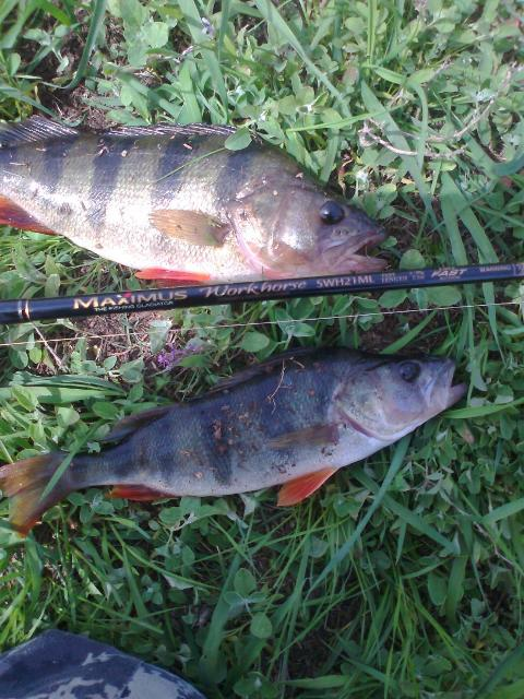Рыболовный отчет Саша Стюхин Тест воблеров