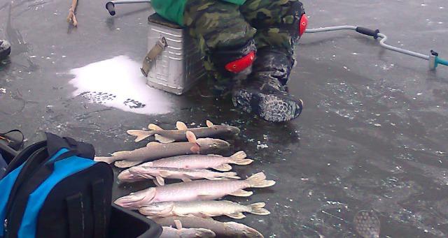 Первый лед жерличная рыбалка!!!