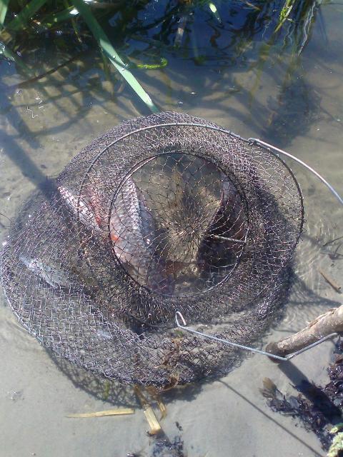Рыболовный отчет Саша Стюхин Рыбалка с ночевкой