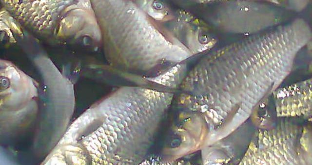 Утренняя  рыбалка на карася