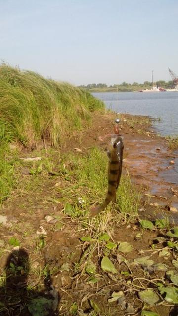Рыболовный отчет Никита  Пакин  LJ Tioga---+