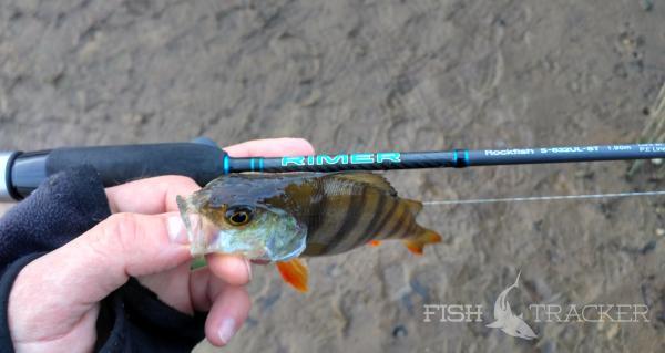 рыбалка в тверской области на окуня