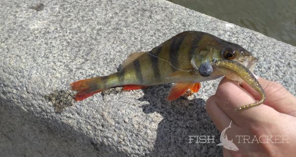 Street Fishing по новому маршруту.  Обкатка спиннинга Team Dubna