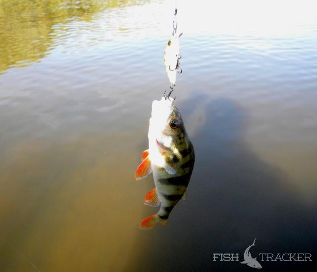 отчеты о рыбалке в нижегородской обл