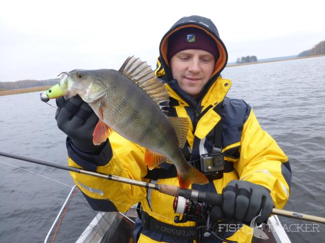 озера ленинградской области где можно ловить крупного окуня