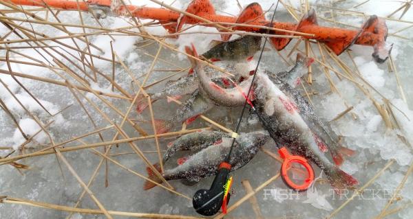 Рыбалка в Ладожских лесах!