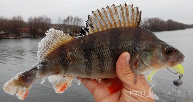 Отчет о рыбалке 15.11.2015