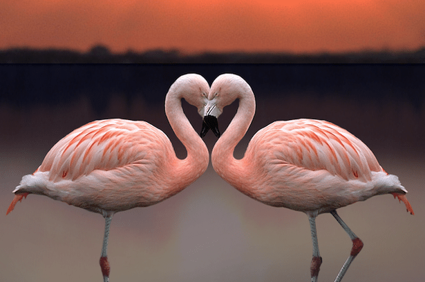 Valentines Day at Dublin Zoo