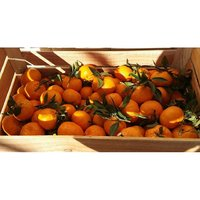 Mandarino tardivo di Ciaculli-img-2
