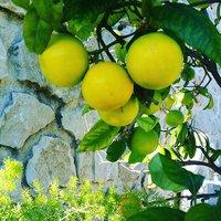 Limone-img-0