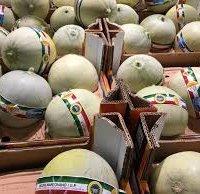 Melone mantovano IGP-img-3