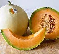 Melone mantovano IGP-img-4
