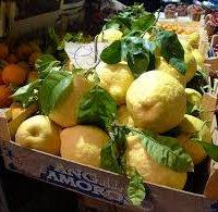 Limone di Sorrento IGP-img-0
