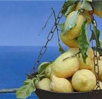Limone di Sorrento IGP-img-4