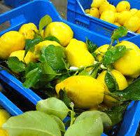 Limone di Sorrento IGP-img-6