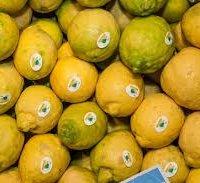 Limone di Sorrento IGP-img-7