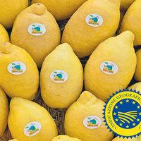 Limone di Sorrento IGP-img-9