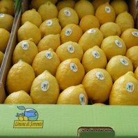 Limone di Sorrento IGP-img-2