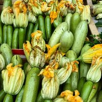 Zucchina-img-0