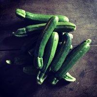 Zucchina-img-4