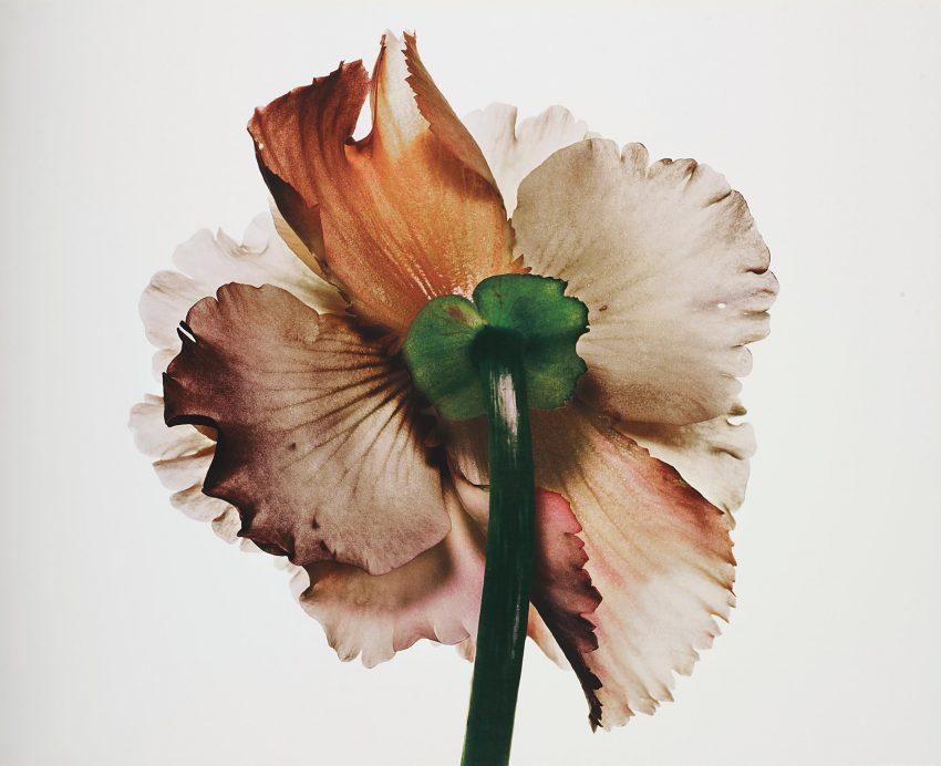 1 Floom Magazine Irving Penn Flower 1