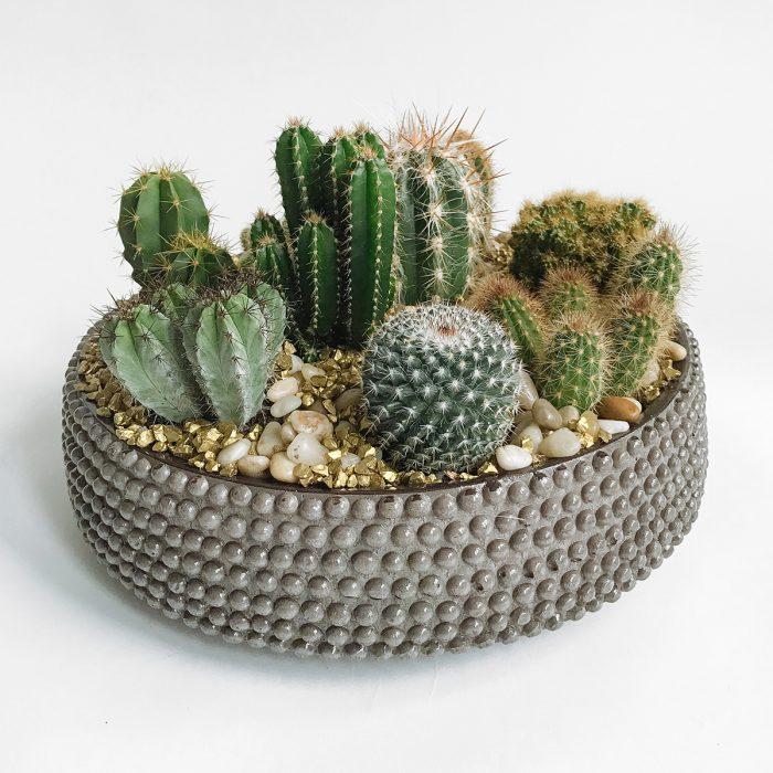 Floom Flowers By Kw Cactus Bowl 1