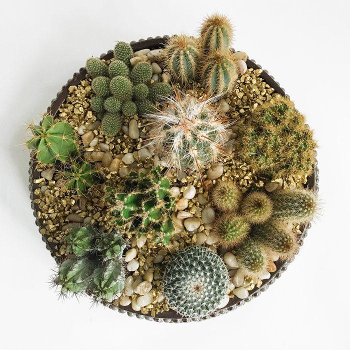 Floom Flowers By Kw Cactus Bowl 2