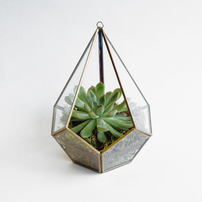 Floom Herbert Isles Succulent Prism 1