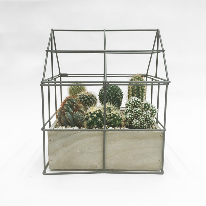 Floom Martin Magpie Cacti Garden 1