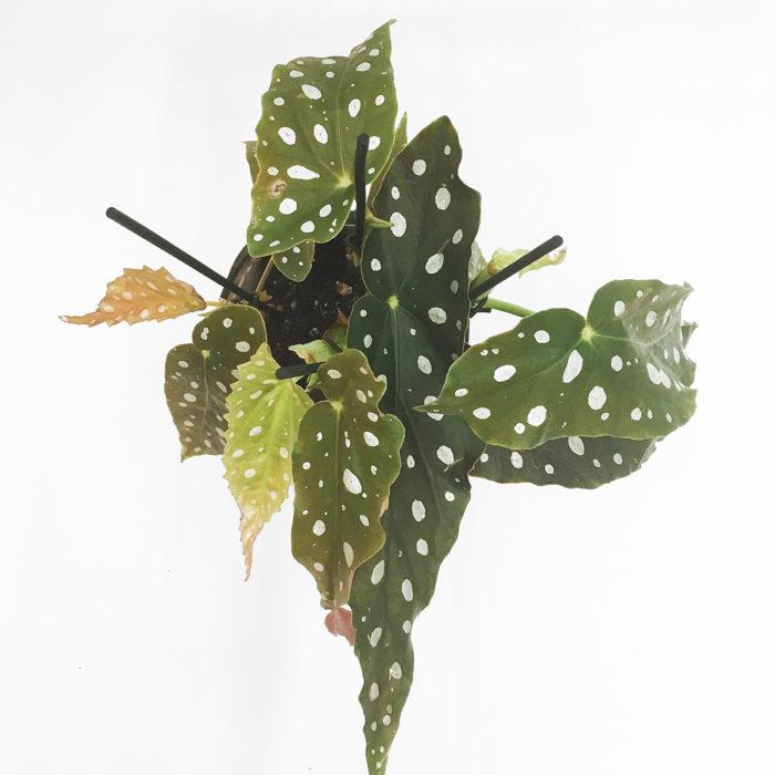 Floom Martin Magpie Planter 2