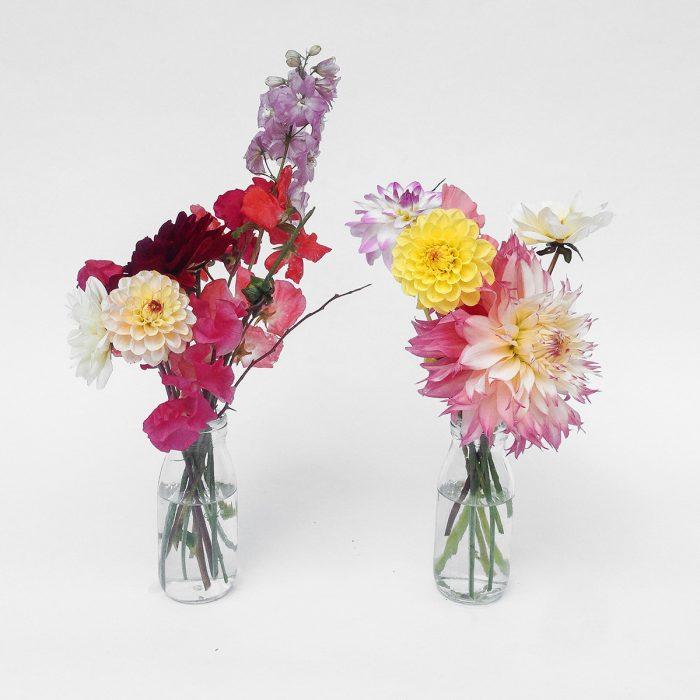 Floom Serendipity Botanist Dahlia Duo 1