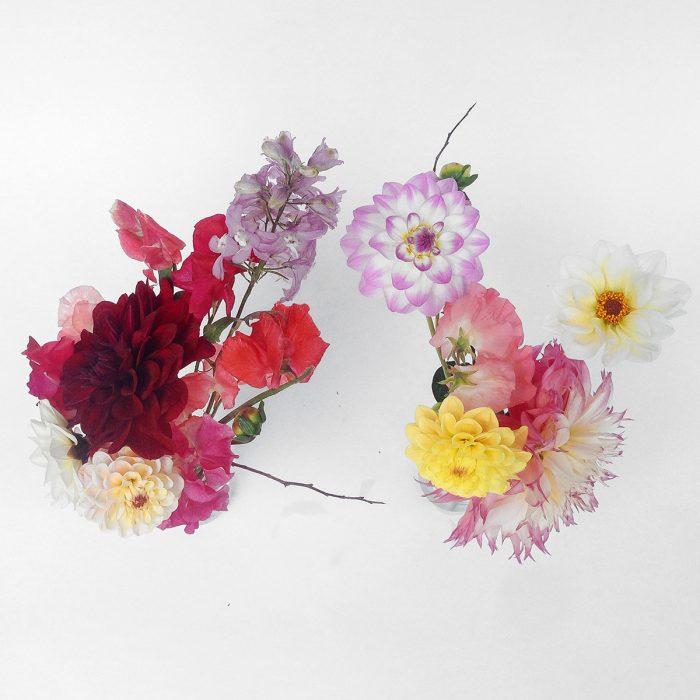 Floom Serendipity Botanist Dahlia Duo 2