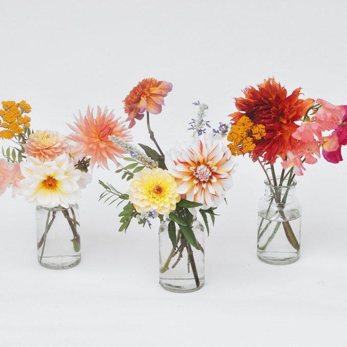 Floom Serendipity Botanist Dahlia Trio 1