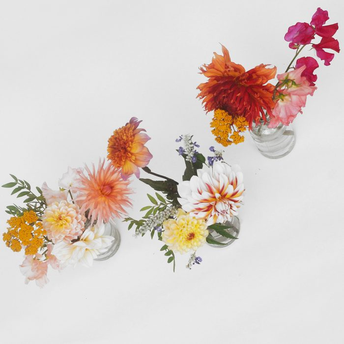 Floom Serendipity Botanist Dahlia Trio 2