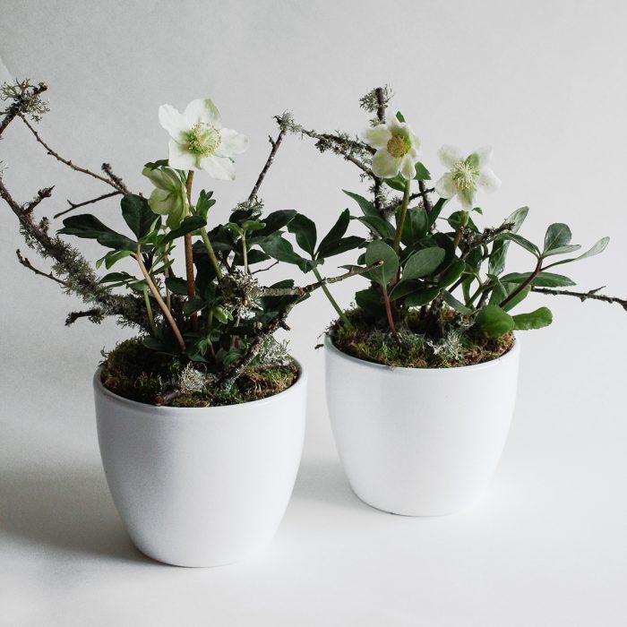 Floom Miss Moles Flower Emporium Hellebore Lichen 1