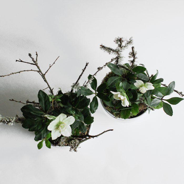 Floom Miss Moles Flower Emporium Hellebore Lichen 2