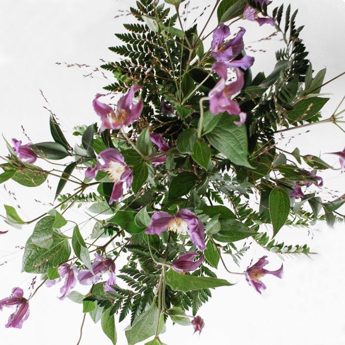 Floom Miss Moles Flower Emporium Purple Haze Clematis Grass 2