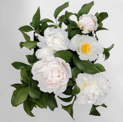 Floom Shilpa Reddy Peony Box 2