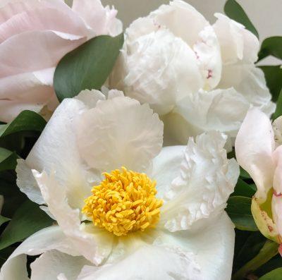Floom Shilpa Reddy Peony Box 4