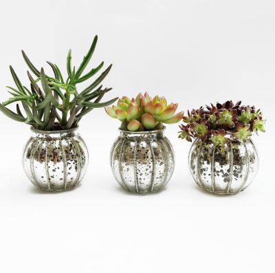 Floom Shilpa Reddy Succulent Trio 1