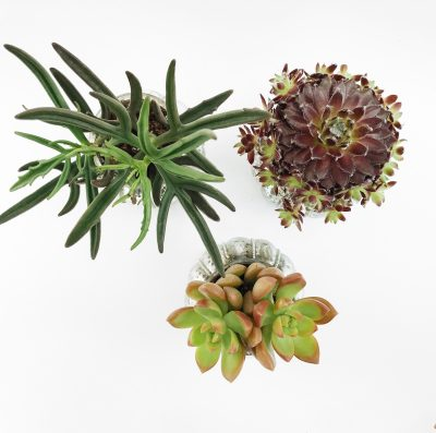 Floom Shilpa Reddy Succulent Trio 2