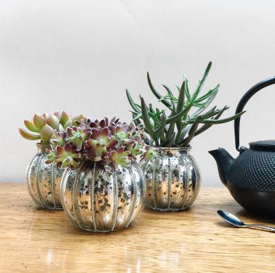 Floom Shilpa Reddy Succulent Trio 3