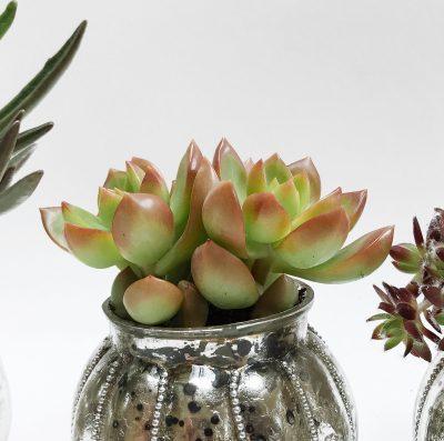 Floom Shilpa Reddy Succulent Trio 4