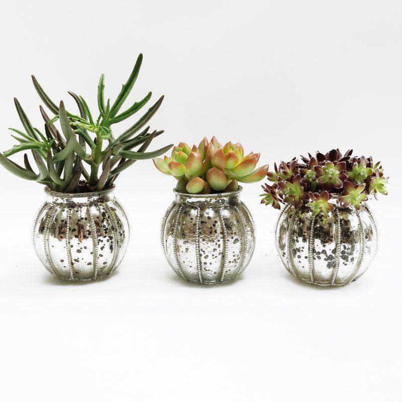 The Brixton Succulent Trio